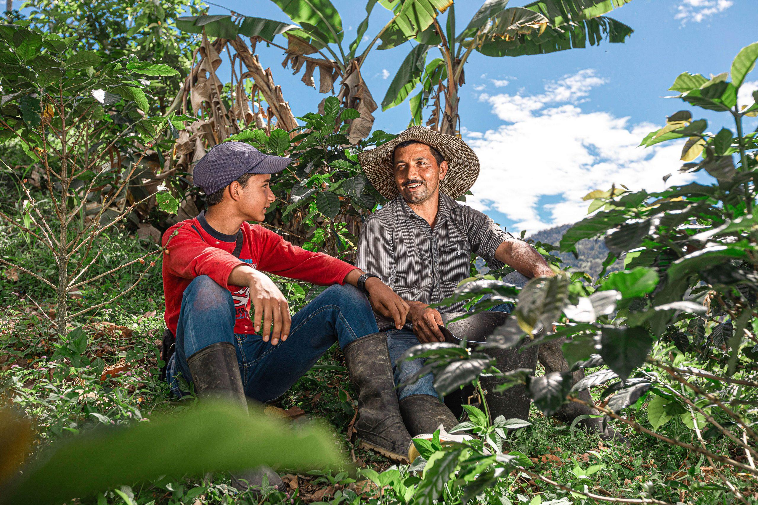 arbatos plantaciju darbuotojai