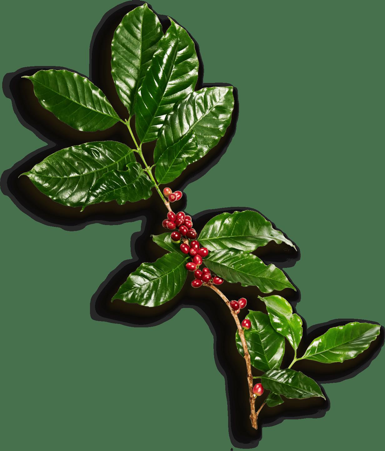 leaf-xl